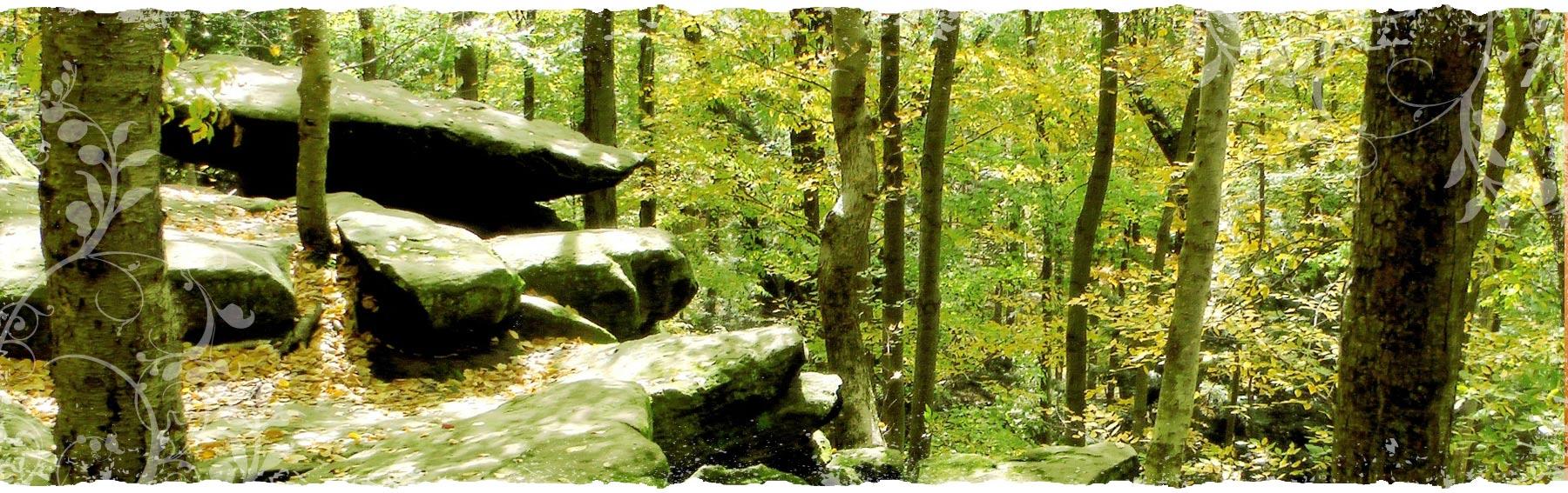 woods-rocks
